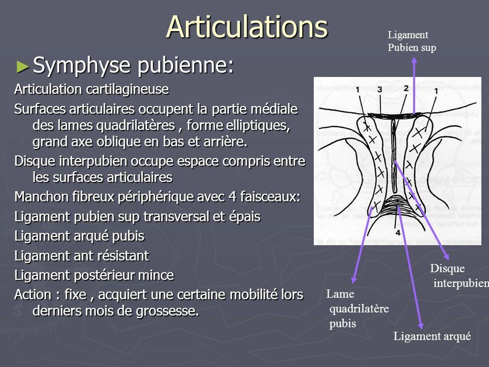 Articulations Symphyse pubienne: Articulation cartilagineuse