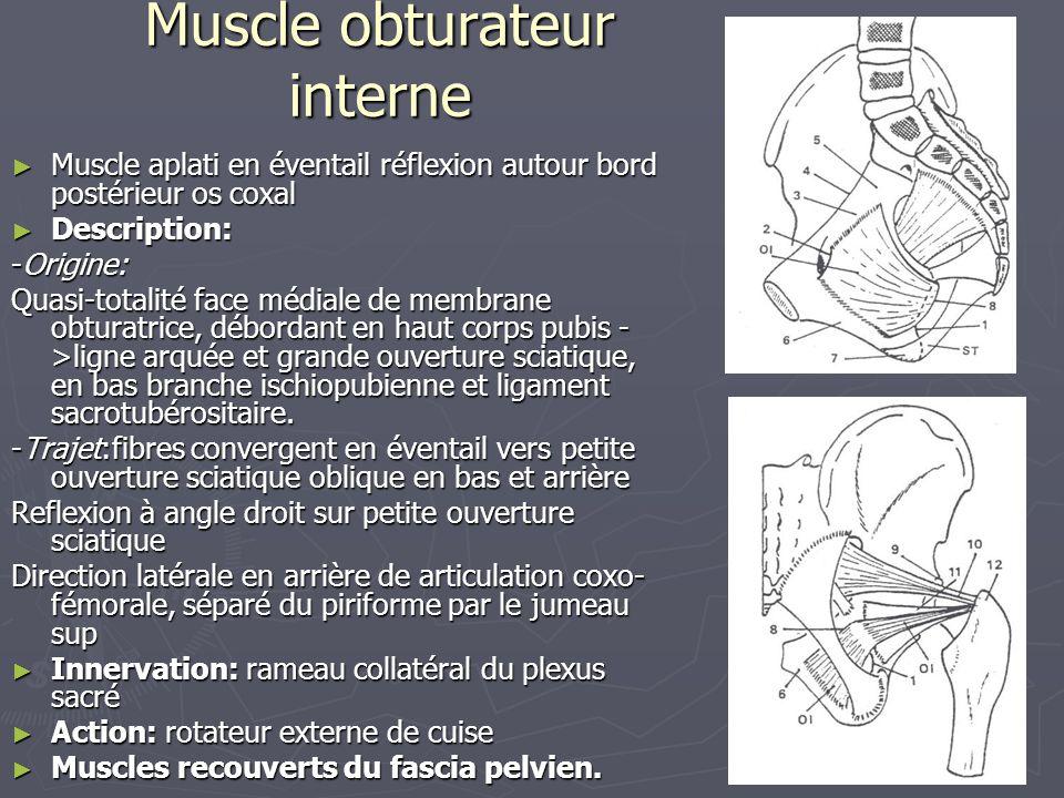 Muscle obturateur interne
