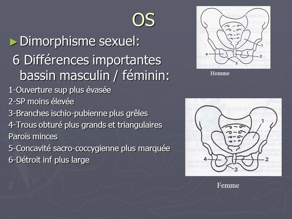 OS Dimorphisme sexuel: