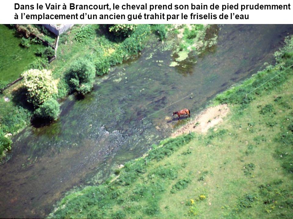 Dans le Vair à Brancourt, le cheval prend son bain de pied prudemment