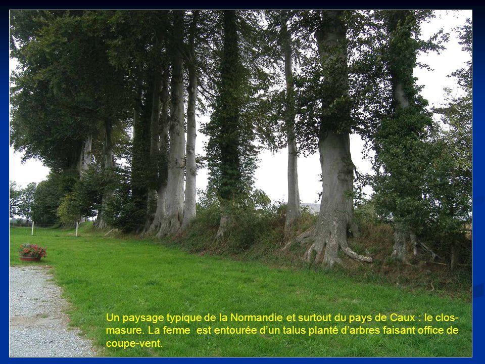 Un paysage typique de la Normandie et surtout du pays de Caux : le clos-masure.