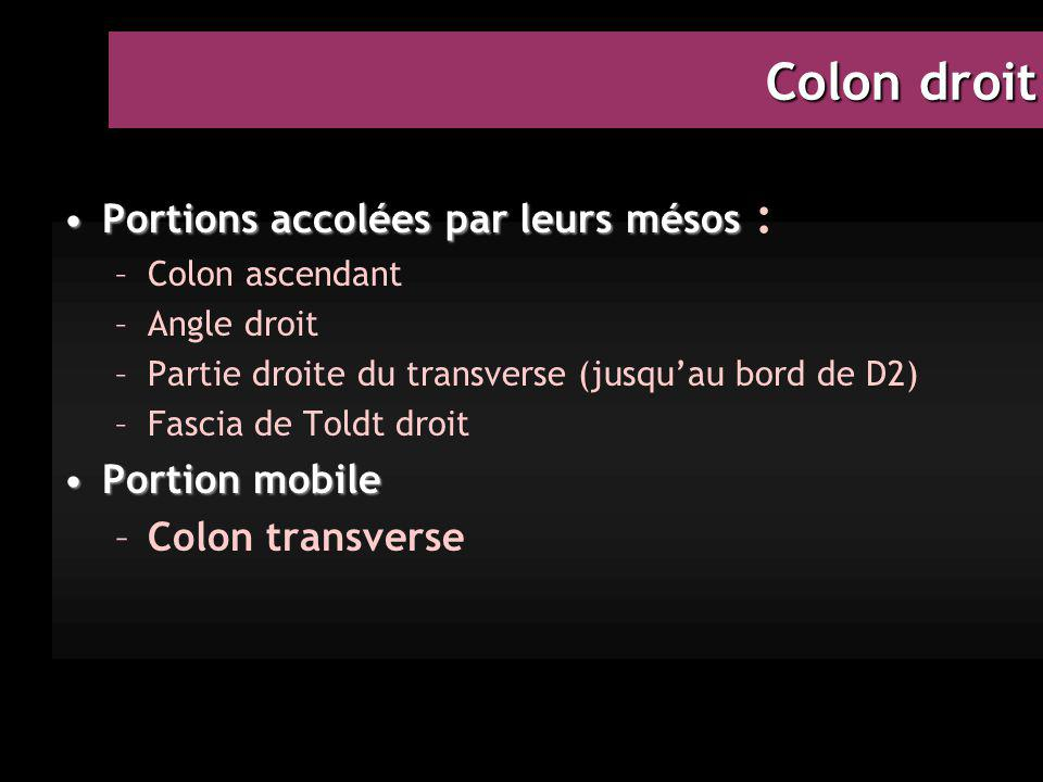 Colon droit Portions accolées par leurs mésos : Portion mobile
