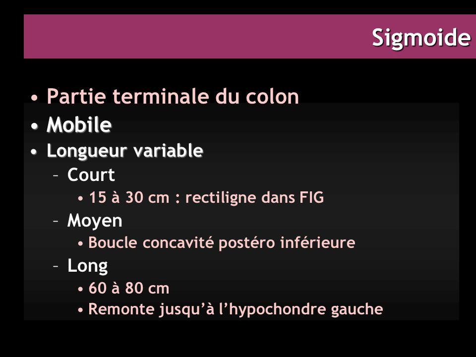 Sigmoide Partie terminale du colon Mobile Longueur variable Court