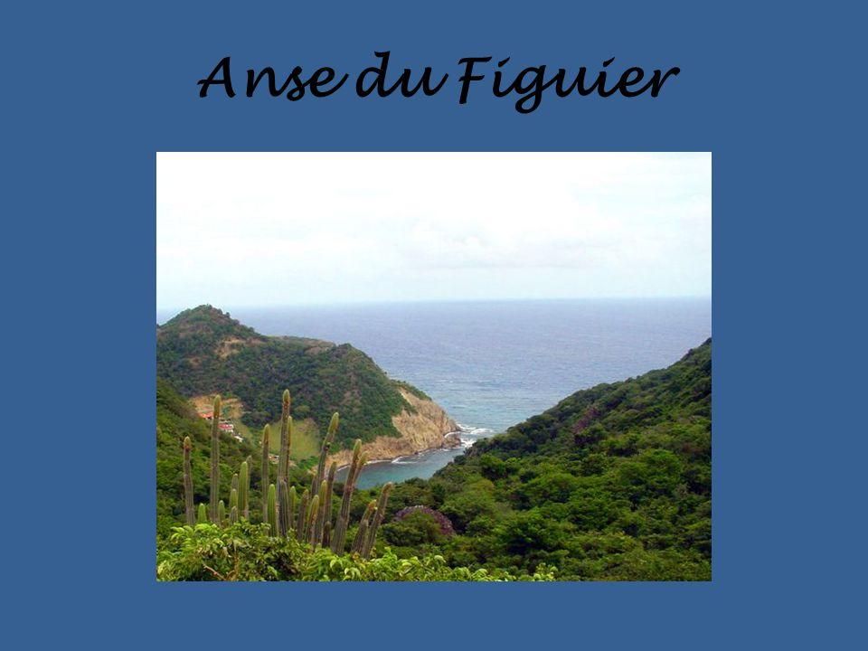 Anse du Figuier