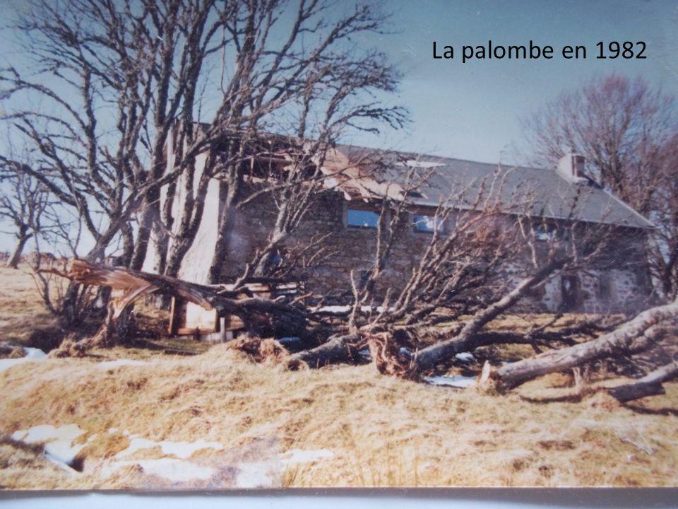 La palombe en 1982