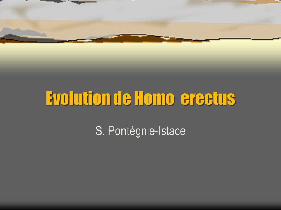 Evolution de Homo erectus