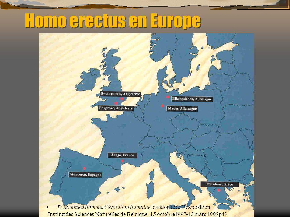 Homo erectus en Europe