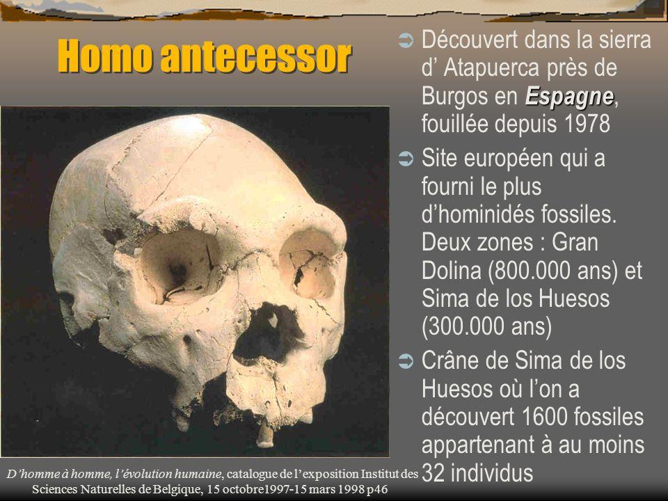 Homo antecessor Découvert dans la sierra d' Atapuerca près de Burgos en Espagne, fouillée depuis 1978.