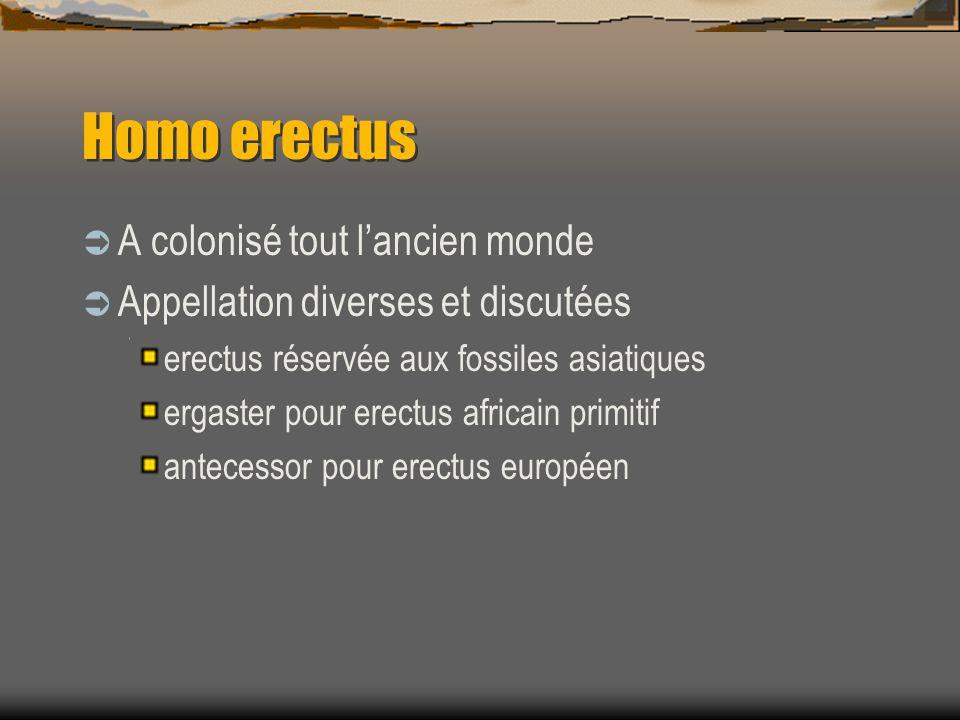 Homo erectus A colonisé tout l'ancien monde