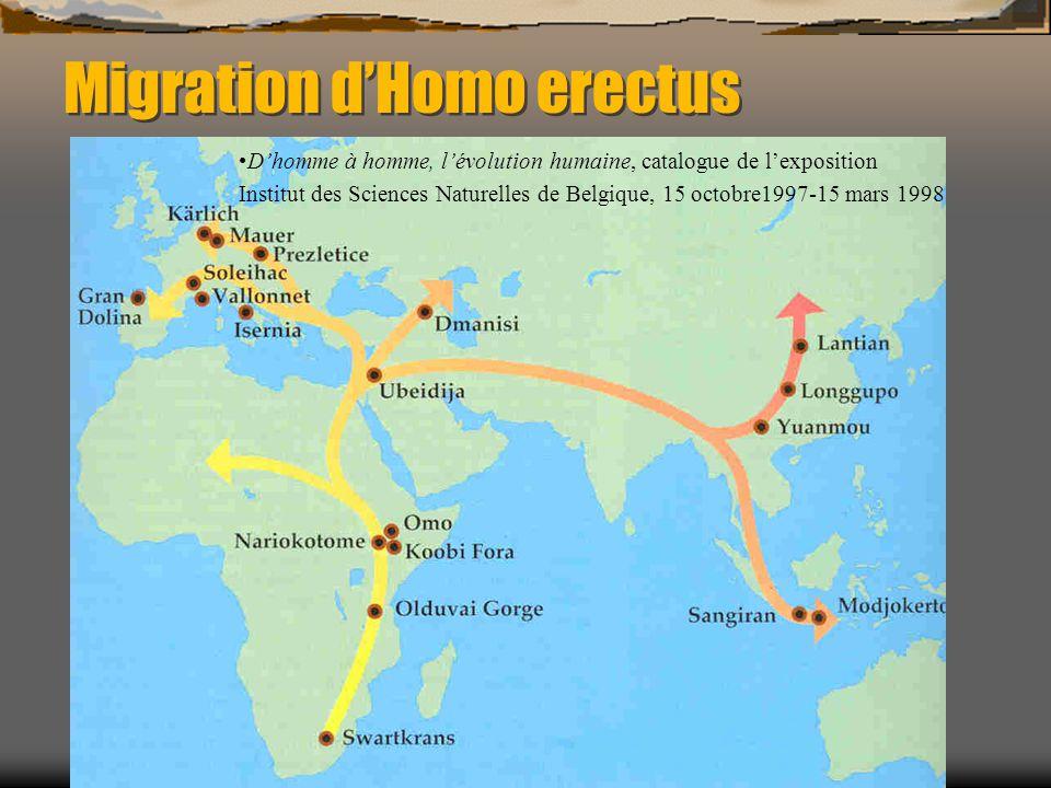 Migration d'Homo erectus