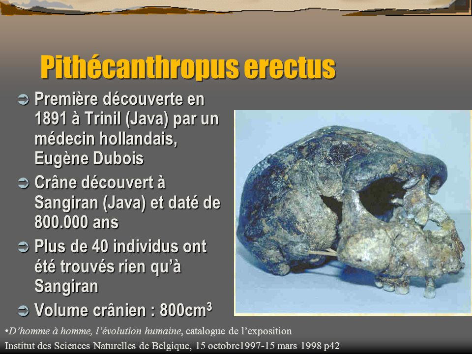 Pithécanthropus erectus