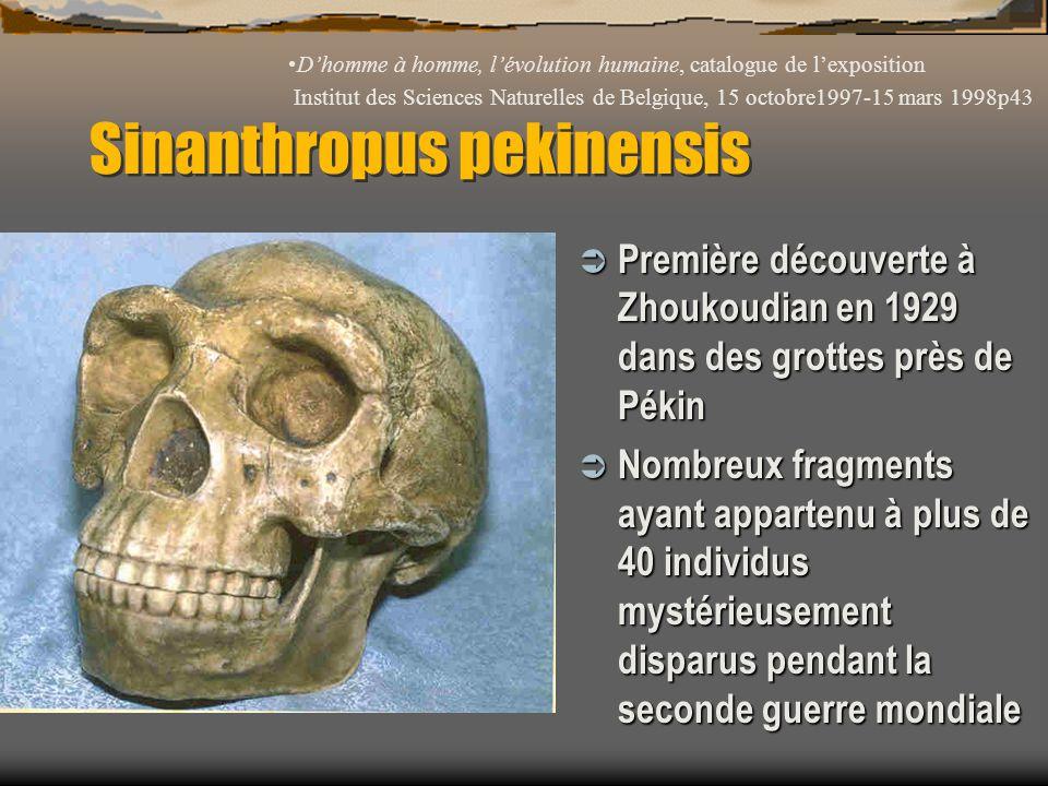 Sinanthropus pekinensis