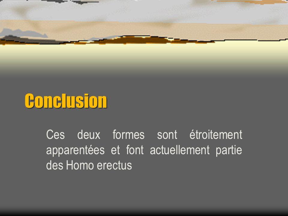 Conclusion Ces deux formes sont étroitement apparentées et font actuellement partie des Homo erectus.