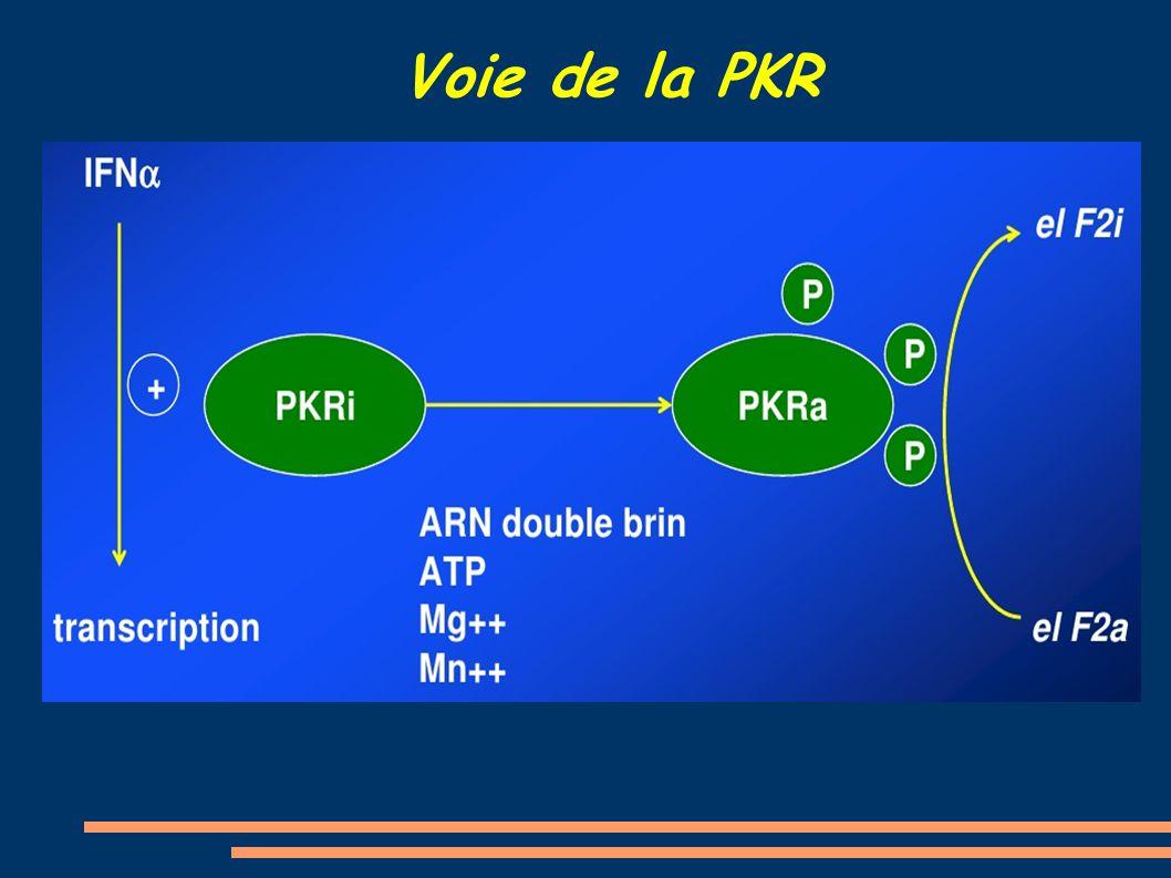 Voie de la PKR