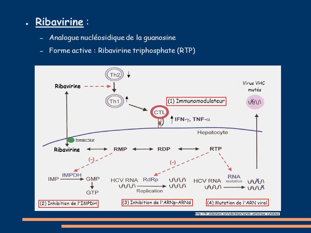 Ribavirine : Analogue nucléosidique de la guanosine