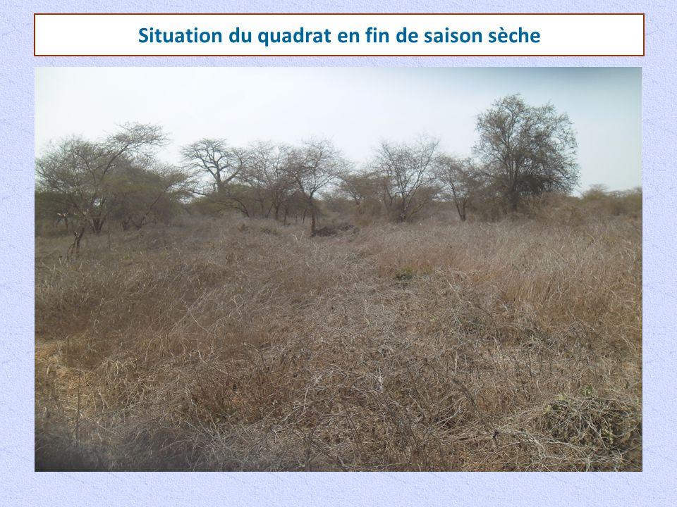 Situation du quadrat en fin de saison sèche