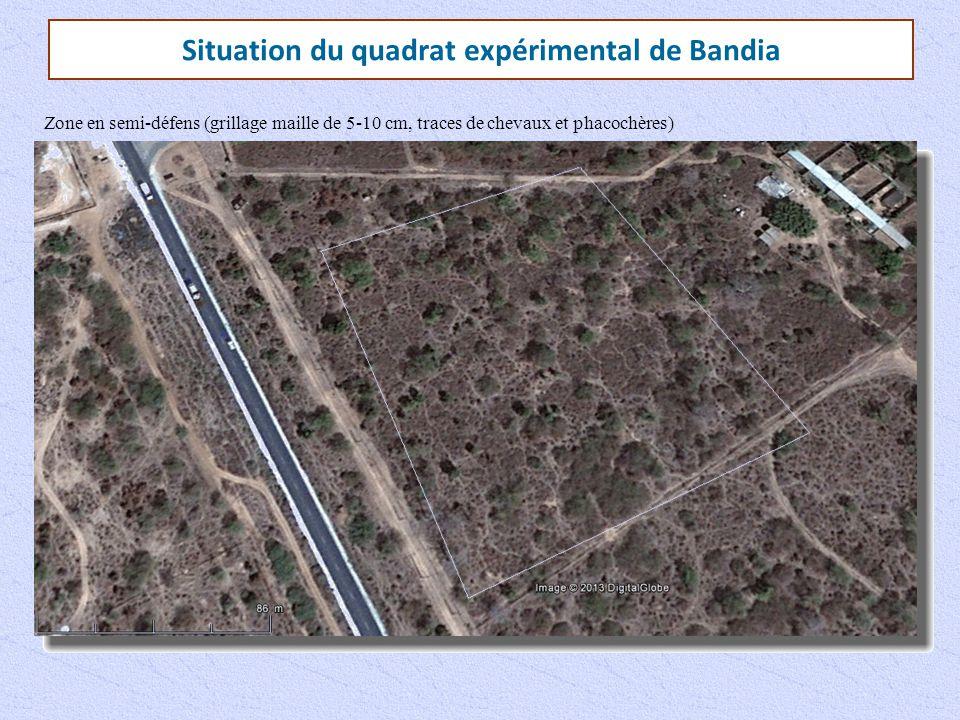 Situation du quadrat expérimental de Bandia