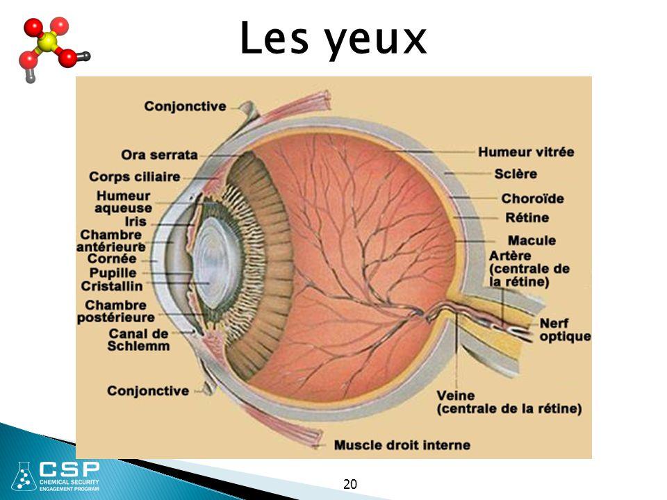 Les yeux 20