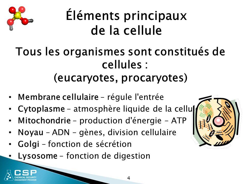 Éléments principaux de la cellule