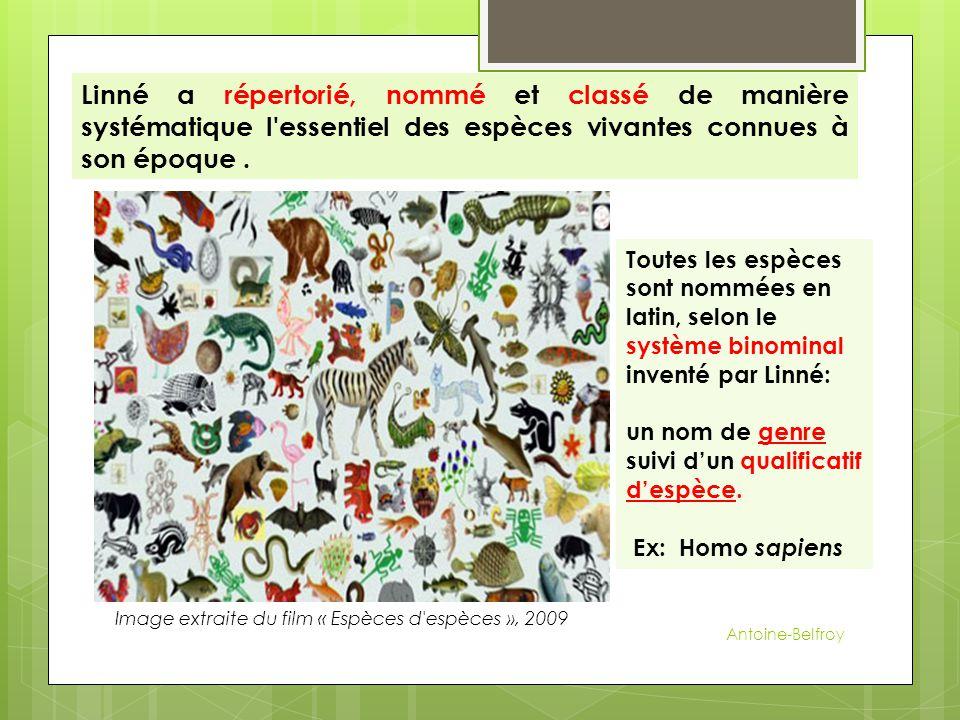 Image extraite du film « Espèces d espèces », 2009