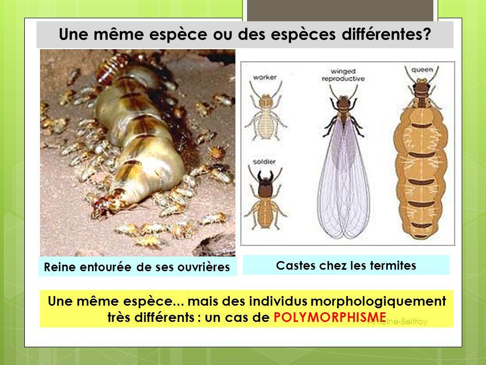 Une même espèce ou des espèces différentes Castes chez les termites