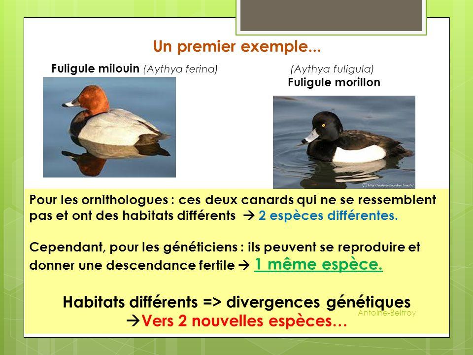 Habitats différents => divergences génétiques