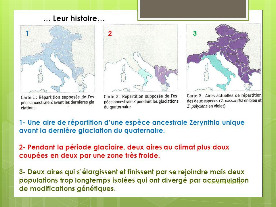 … Leur histoire… 1. 2. 3. 1- Une aire de répartition d'une espèce ancestrale Zerynthia unique avant la dernière glaciation du quaternaire.