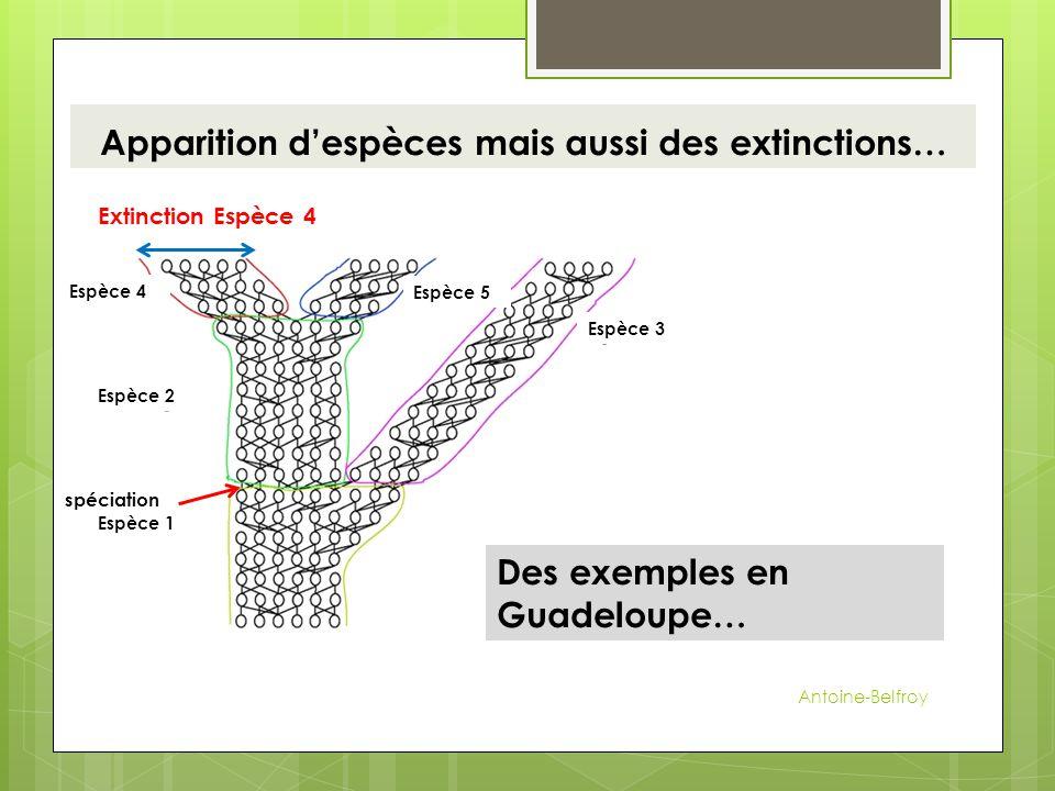 Apparition d'espèces mais aussi des extinctions…
