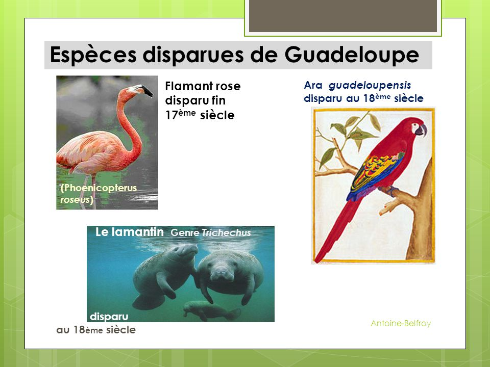 Espèces disparues de Guadeloupe