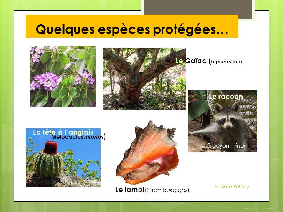 Quelques espèces protégées…