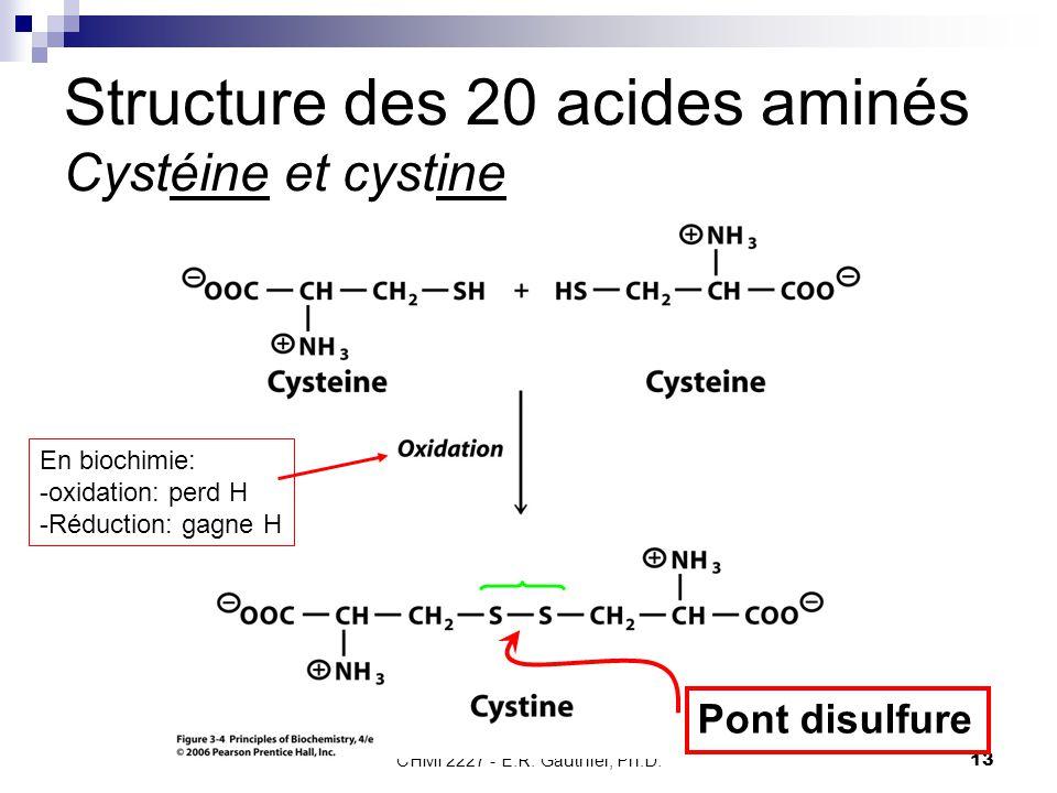 Structure des 20 acides aminés Cystéine et cystine