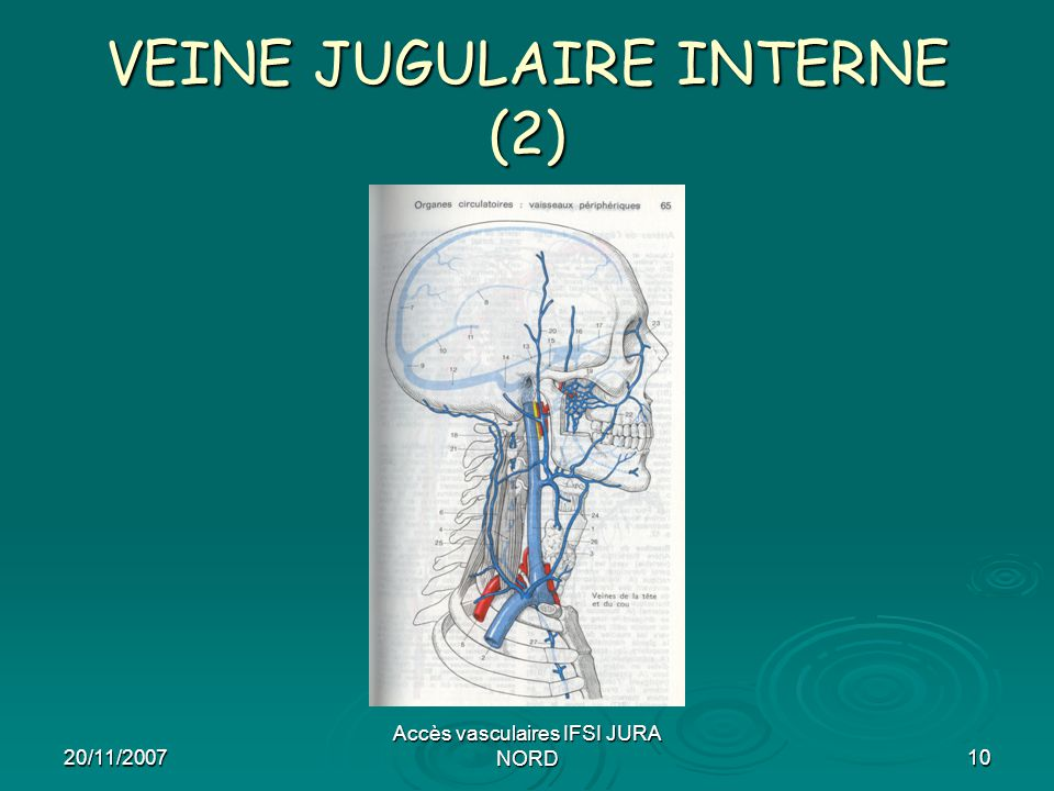 VEINE JUGULAIRE INTERNE (2)