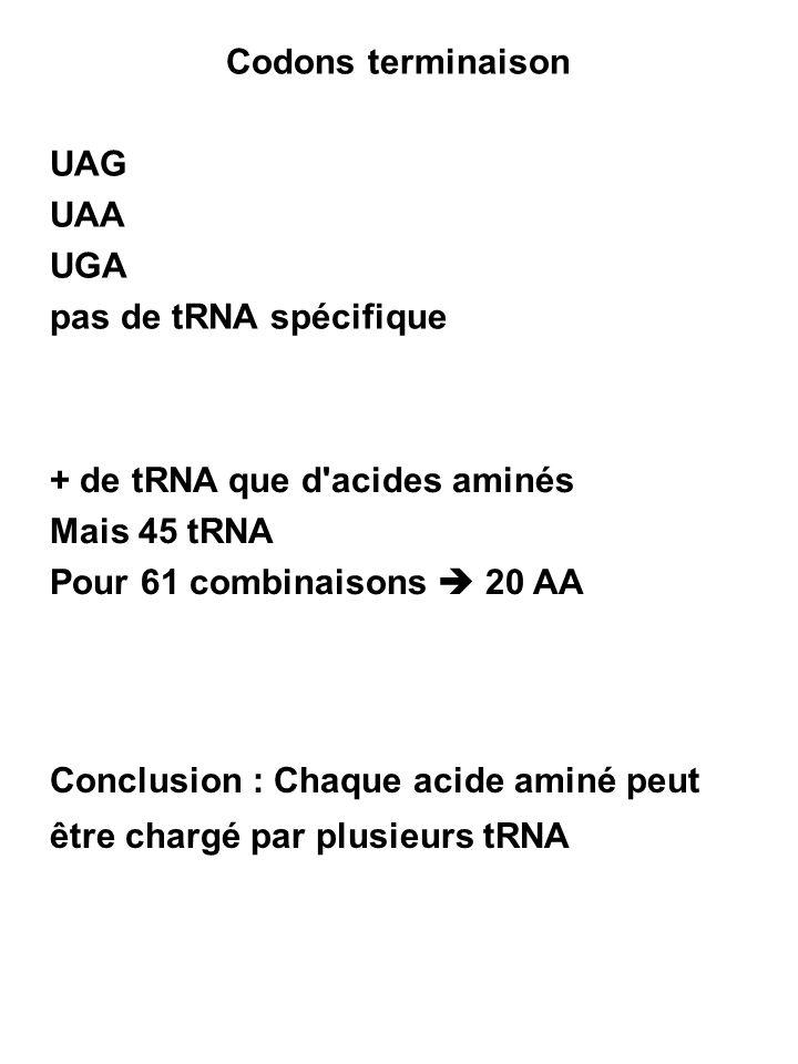 Codons terminaison UAG UAA UGA pas de tRNA spécifique