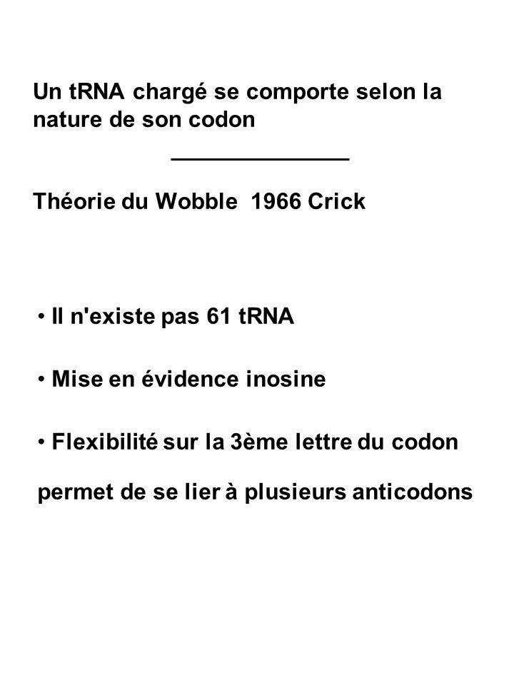 Un tRNA chargé se comporte selon la nature de son codon Théorie du Wobble 1966 Crick