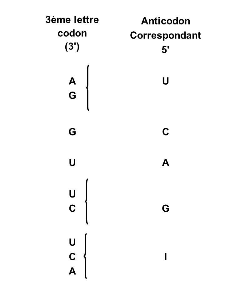 3ème lettre codon (3 ) Anticodon Correspondant 5 A G U C I