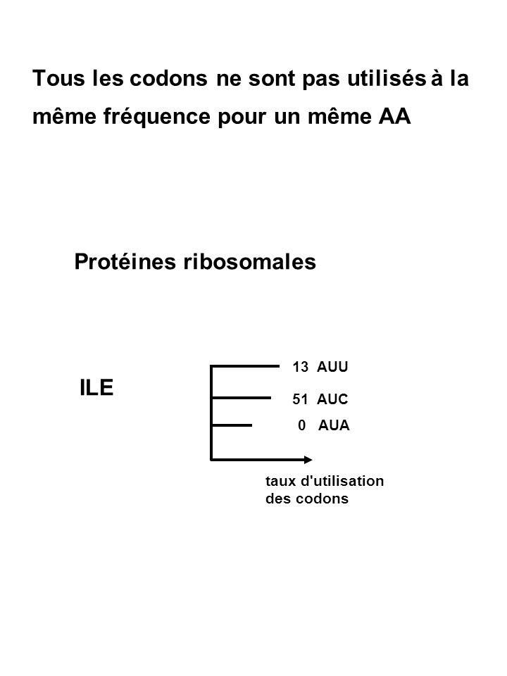 Protéines ribosomales