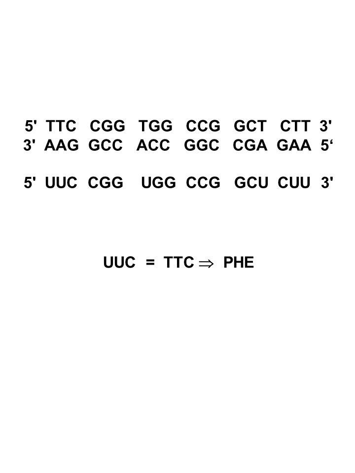 5 TTC CGG TGG CCG GCT CTT 3 3 AAG GCC ACC GGC CGA GAA 5' 5 UUC CGG UGG CCG GCU CUU 3