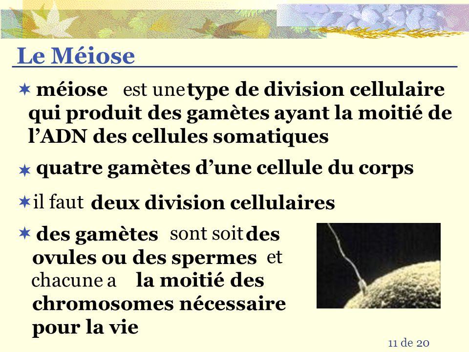 Le Méiose est une. type de division cellulaire qui produit des gamètes ayant la moitié de l'ADN des cellules somatiques.