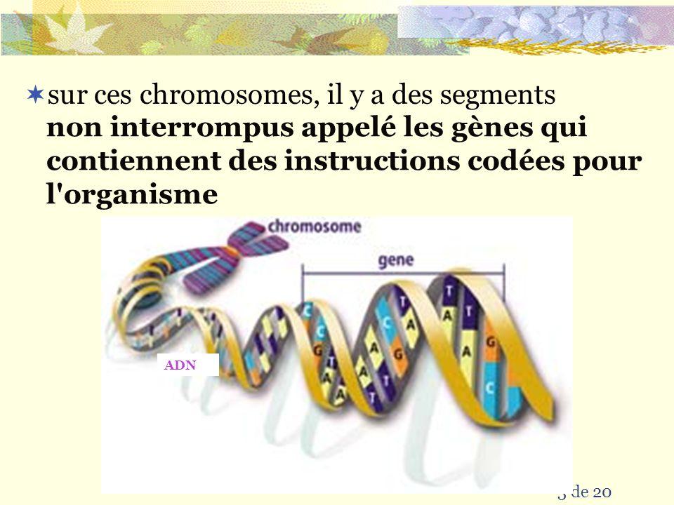 sur ces chromosomes, il y a des segments