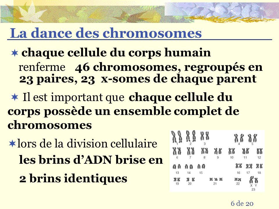 La dance des chromosomes