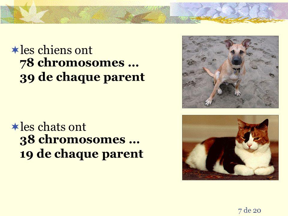 les chiens ont 78 chromosomes … 39 de chaque parent les chats ont