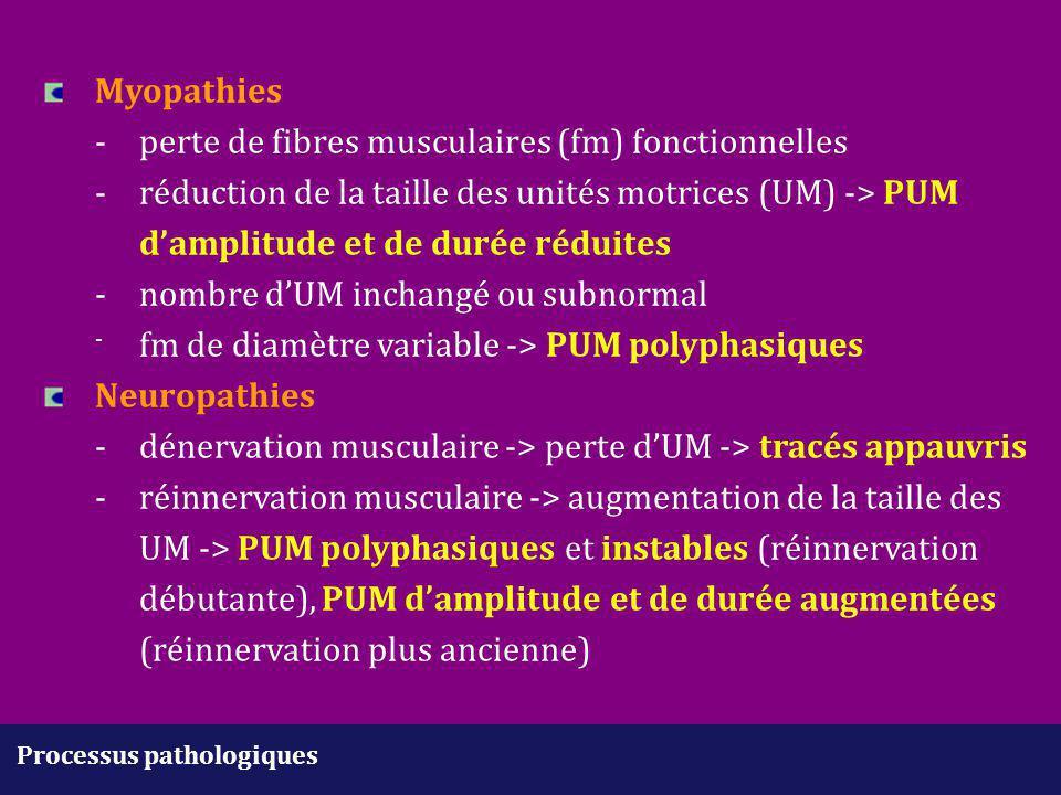 Myopathies. -. perte de fibres musculaires (fm) fonctionnelles. -