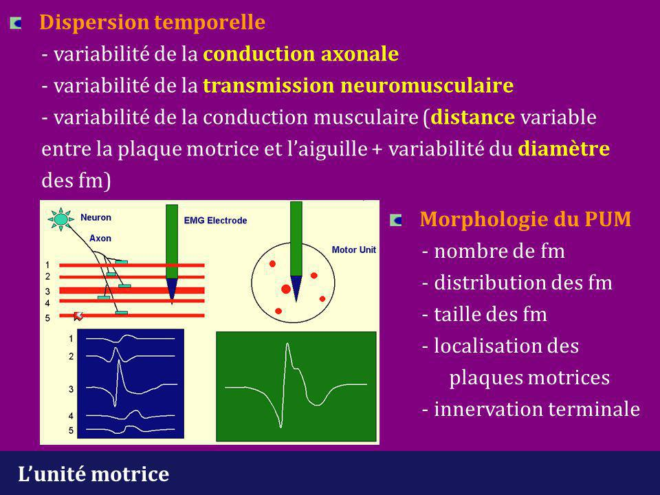 Dispersion temporelle. - variabilité de la conduction axonale