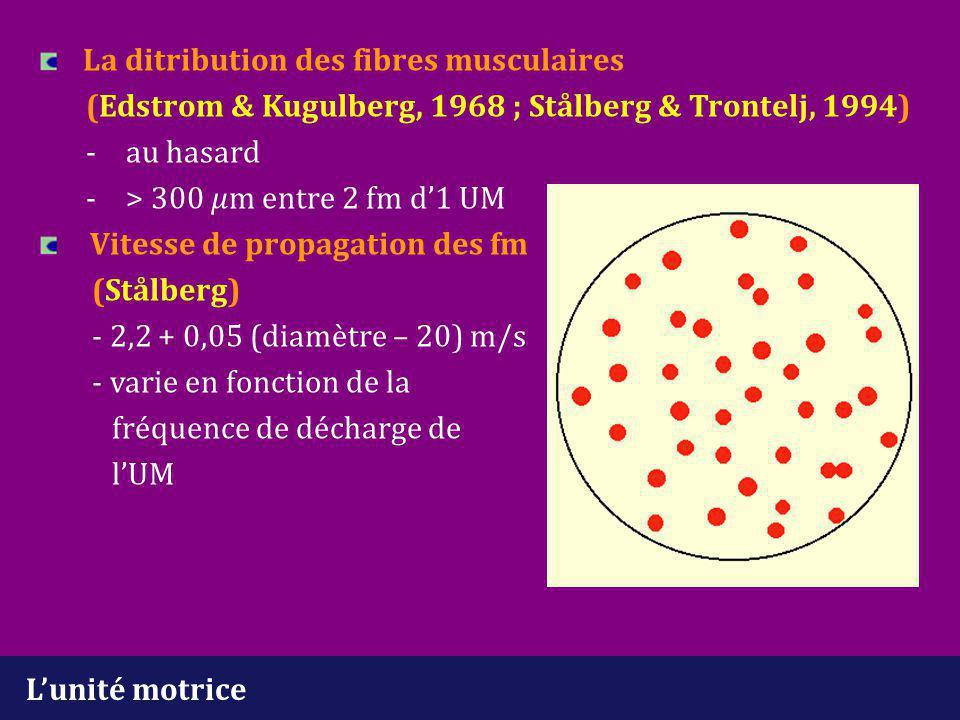 La ditribution des fibres musculaires