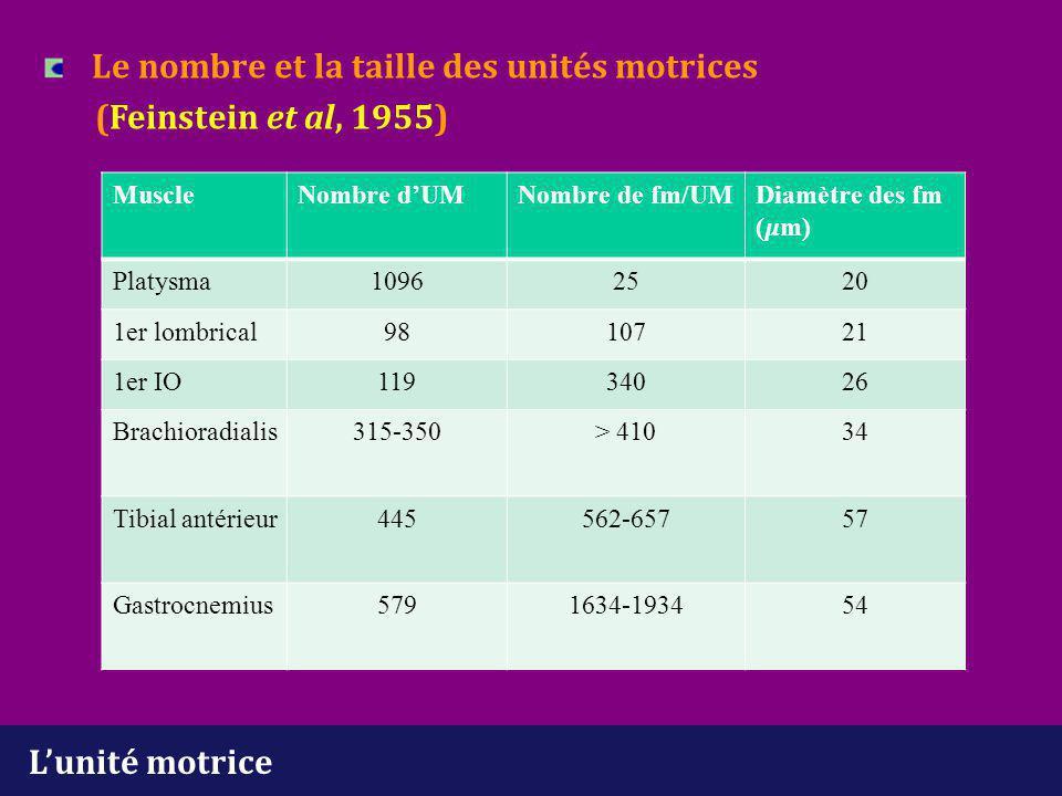Le nombre et la taille des unités motrices (Feinstein et al, 1955)