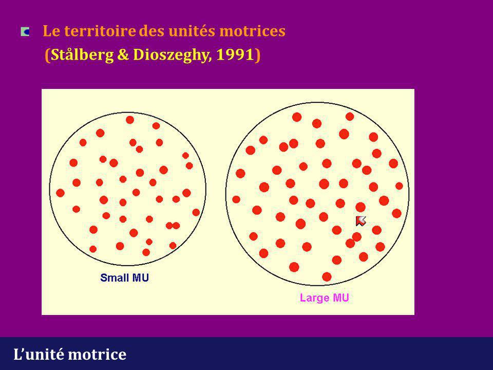 Le territoire des unités motrices (Stålberg & Dioszeghy, 1991)