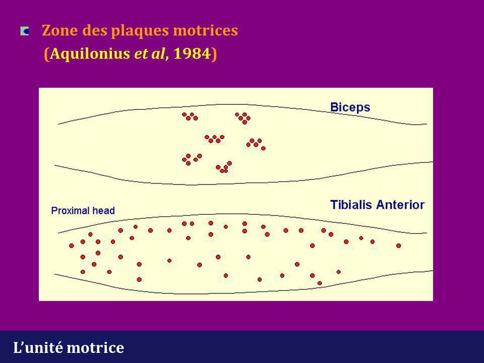 Zone des plaques motrices (Aquilonius et al, 1984)