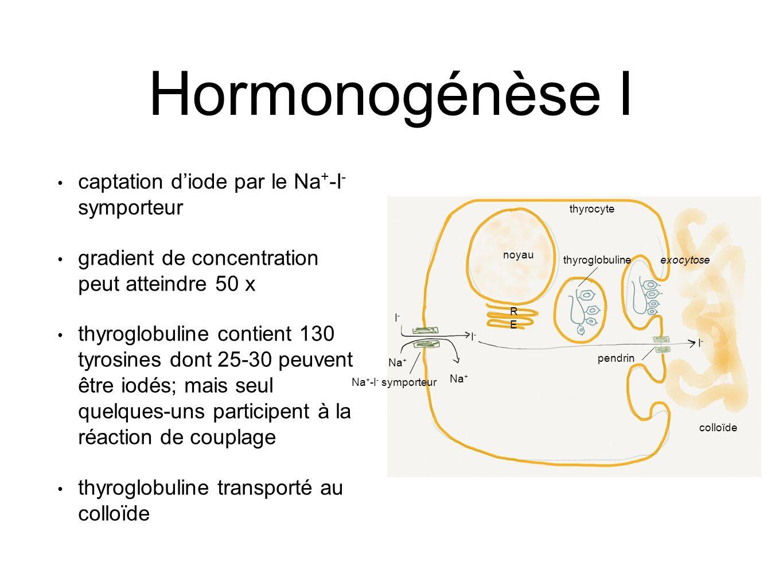 Hormonogénèse I captation d'iode par le Na+-I- symporteur