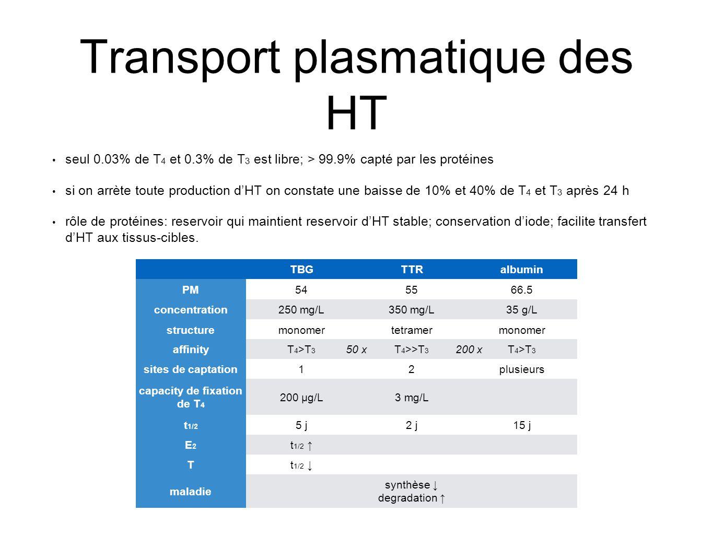 Transport plasmatique des HT