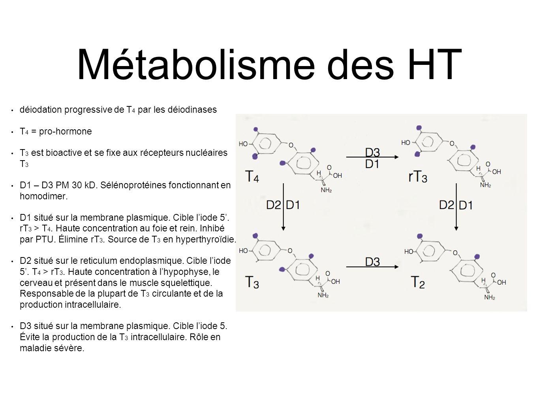 Métabolisme des HT déiodation progressive de T4 par les déiodinases
